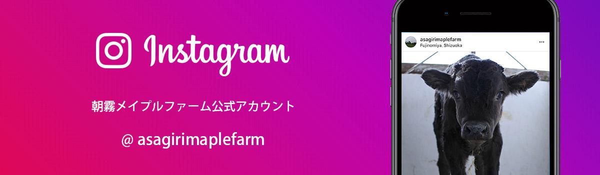朝霧メイプルファーム公式Instagramアカウント